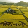 Trung Quốc trồng thành công lúa nước mặn, có thể nuôi sống 80 triệu người