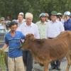 Quỹ Thiện Tâm trao 150 con bò giống cho hộ nghèo
