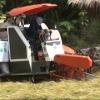 Nông dân phấn khởi do giá lúa tăng cao