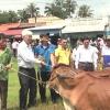 Quỹ Thiện Tâm bàn giao bò cái giống tại huyện Gò Công Tây