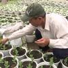Làng hoa Mỹ Tho chuẩn bị cung ứng khoảng 1 triệu giỏ hoa phục vụ Tết