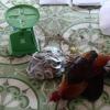 Công an Châu Thành bắt 16 đối tượng đá gà