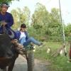 Về Hồng Ngự trãi nghiệm du lịch nông nghiệp