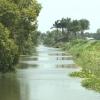 Tiền Giang ban hành Chỉ thị kiểm soát lục bình trên các tuyến kênh thủy lợi