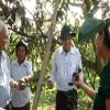 Chủ tịch UBND tỉnh Tiền Giang gặp gỡ nông dân trồng vú sữa