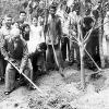 Bộ nông nghiệp và phát nông thôn phát động Tết trồng cây đời đời nhớ ơn Bác