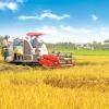 Gạo Việt đã xuất khẩu đi hơn 150 thị trường, cơ hội tiếp tục rộng mở