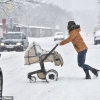 Châu Âu tê liệt vì tuyết rơi dày