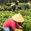 Các giải pháp kỹ thuật giúp cây trồng thích ứng với hạn và xâm nhập mặn