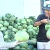 Nhộn nhịp chợ trái cây đầu mối An Hữu ngày giáp Tết