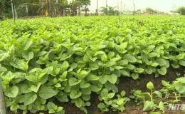 Giải pháp cung cấp nước ngọt cho 2.600 hecta rau màu các huyện phía Đông