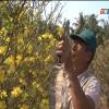 Chợ Gạo phát triển mạnh nghề trồng mai vàng phục vụ Tết