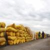 Khẩn trương bơm vốn cho doanh nghiệp cứu giá lúa, gạo