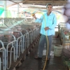 Hiệu quả bất ngờ từ mô hình chăn nuôi 'tổng hợp' ở Chợ Gạo