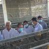 Chủ tịch UBND tỉnh Tiền Giang làm việc với các HTX sản xuất nông nghiệp ứng dụng công nghệ cao