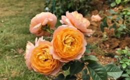 Sững sờ trước vườn hồng 3,5 ha tuyệt đẹp vừa nhận kỷ lục Việt Nam
