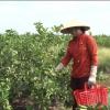Người phụ nữ làm giàu từ vùng đất phèn Tân Phước