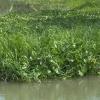 Lục bình và rác thải đã xuất hiện trở lại ở các tuyến kênh, rạch huyện Gò Công Đông