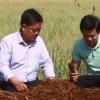 Sử dụng phế phẩm cây sả vào sản xuất nấm rơm (10.04.2019)