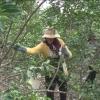 Khởi nghiệp từ cây chanh không hạt