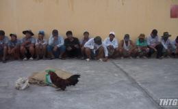 Bắt quả tang 01 vụ đá gà ăn thua bằng tiền tại huyện Gò Công Đông