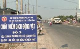 Chủ tịch UBND tỉnh Tiền Giang yêu cầu tăng cường phòng chống dịch tả heo Châu Phi