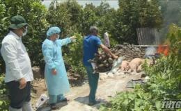 Tiền Giang tiêu hủy hơn 3000 con heo với trọng lượng gần 177 tấn