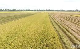"""Bạn nhà nông """"Nâng cao năng suất và chất lượng lúa hè thu"""""""