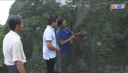 """Cây lành trái ngọt """"Phủ lưới cho vườn mãng cầu Tân Phước"""""""