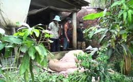Kiểm tra công tác phòng, chống dịch tả heo Châu Phi