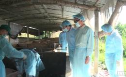 Bộ NN&PTNT kiểm tra công tác phòng, chống dịch tả heo Châu Phi tại Tiền Giang