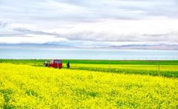 Xứ 'hoa vàng cỏ xanh' đẹp như tranh vẽ ở Trung Quốc