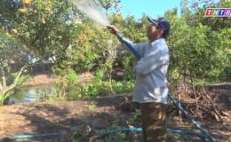 Nông dân sản xuất kinh doanh giỏi Nguyễn Văn Bé Hai