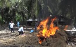 Gò Công Tây tiêu hủy 40 con heo mắc bệnh dịch tả heo Châu Phi