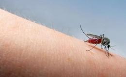 Đã có 15 người tử vong do sốt xuất huyết