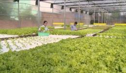 Mô hình trồng rau công nghệ cao