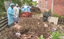 Tiền Giang đã tiêu hủy hơn 4.500 tấn heo nhiễm bệnh dịch tả heo Châu Phi