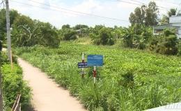 Lục bình xâm lấn nhiều tuyến kênh cấp 1 của huyện Gò Công Đông