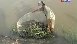 Mưu sinh mùa nước nỗi