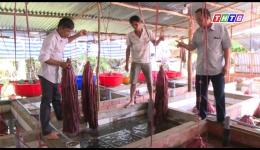 Mô hình nuôi lươn giống nhân tạo