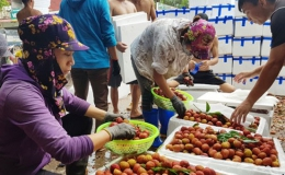 Trung Quốc vẫn là thị trường lớn cho rau quả xuất khẩu chính ngạch