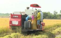 Dự báo hạn và xâm nhập mặn sẽ ảnh hưởng đến sản xuất vụ Đông Xuân 2019-2020 các huyện phía Đông