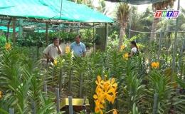 """Chuyên đề 27-11 """"Mô hình trồng hoa lan đạt hiệu quả cao…"""""""
