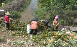 """Chuyên đề Tân Phước 14-11: """"Thành quả từ xây dựng nông thôn mới ở xã Mỹ Phước"""""""