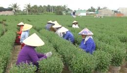 Người dân kiếm thêm thu nhập bằng nghề chăm sóc hoa Tết