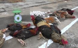 Triệt phá tụ điểm đá gà tại Gò Công Tây thu giữ hơn 125 triệu đồng