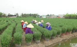 Tổ hợp tác sản xuất hoa kiểng Mỹ Phong cung ứng hơn 800.000 giỏ hoa phục vụ Tết