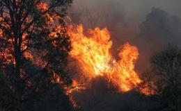 Cháy rừng có thể gây thiệt hại kinh tế cho Australia hàng chục tỷ AUD