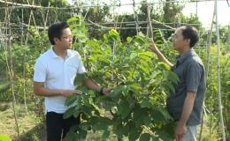 """Cây lành trái ngọt """"Cây na Đài Loan phát triển trên đất Tiền Giang"""""""
