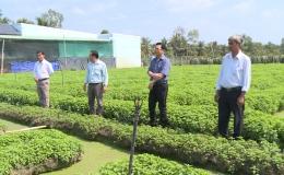 Nông nghiệp Tiền Giang năm 2019 vượt qua khó khăn phát triển ổn định